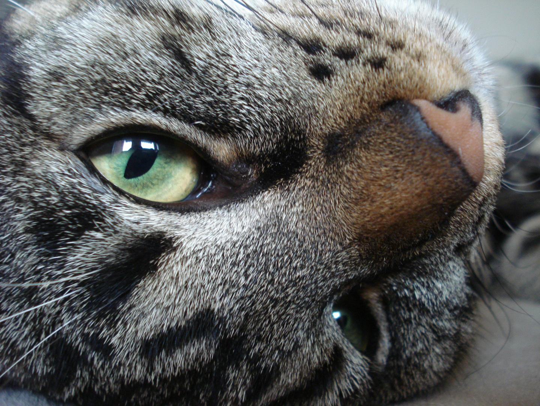 Diese Augen können nie mals lügen
