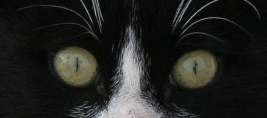 diese Augen sehen eine schöne Welt