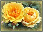 ... diese beiden Rosen ...