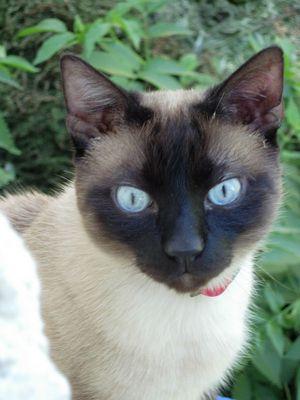 Diese blaue Augen....