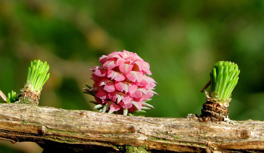 Diese Blüte wird bestimmt sehr oft übersehen