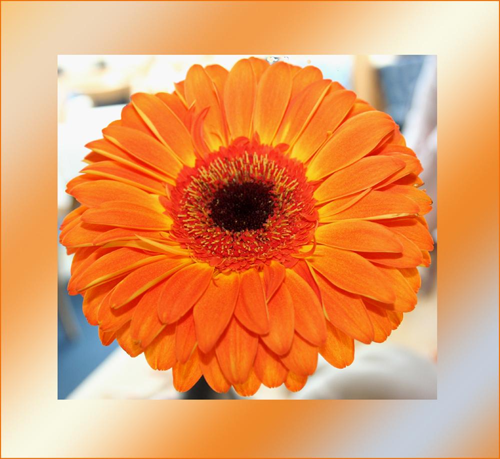 Diese Blume