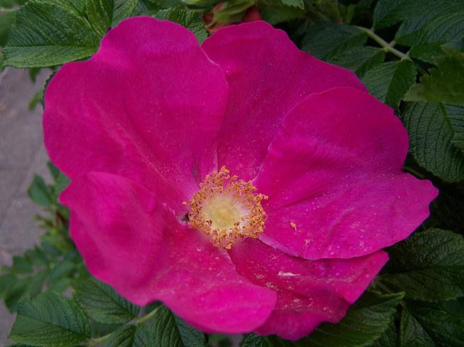 Diese Blume wächst in unserer gesamten Straße,