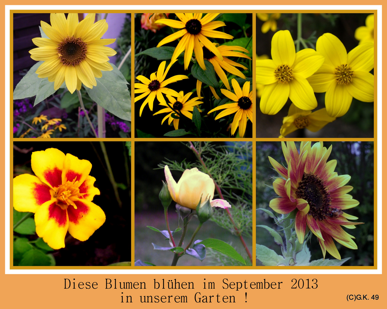 Diese Blumen erfreuen uns auch im September 2013 !