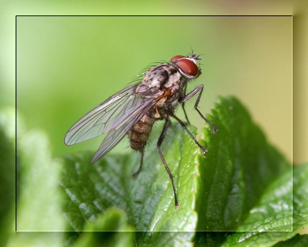 diese Fliege...