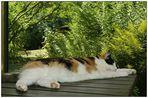 Diese Hitze macht auch Lyra platt!