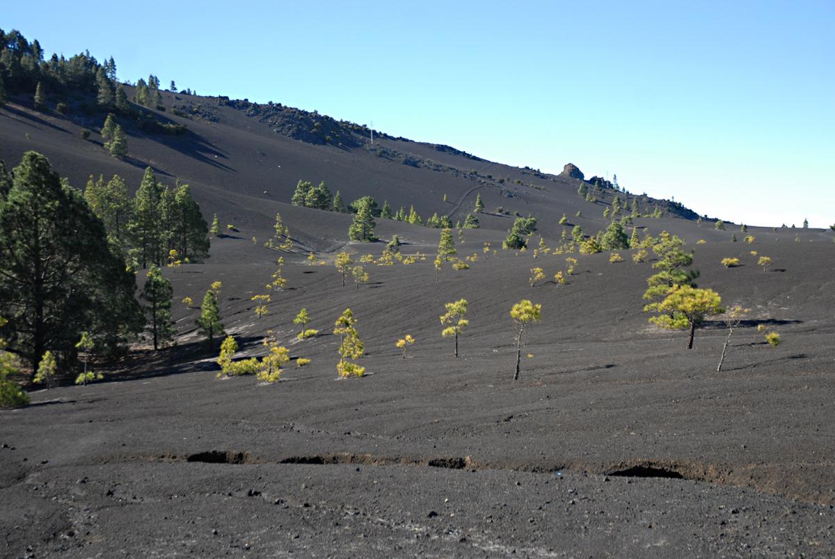 Diese Hochfläche zeigt den vulkanischen Ursprung von La Palma