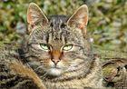 Diese hübsche Katze lebt nicht mehr......das Schicksal hatte es nicht gut mit ihr gemeint.....