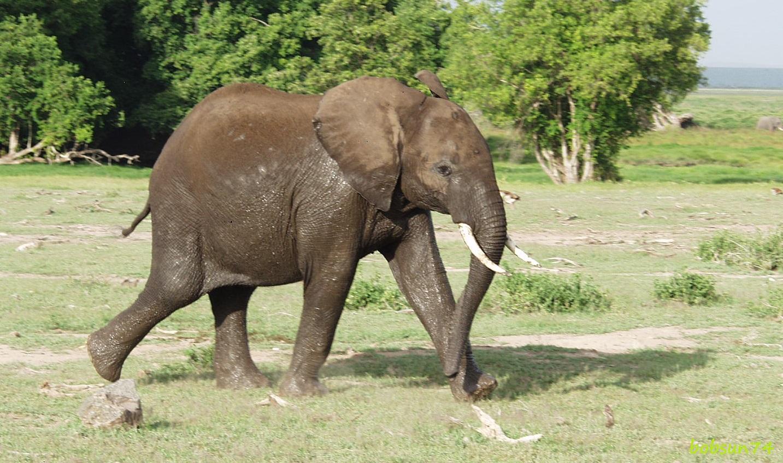 Diese Jugend im Amboseli Nationalpark!