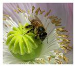 Diese kesse Biene...hat die Galerie nicht ueberlebt...