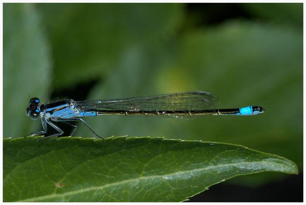 Diese Libelle habe ich im Garten entdeckt ....