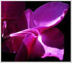 diese Orchidee hat nicht nur Stil...