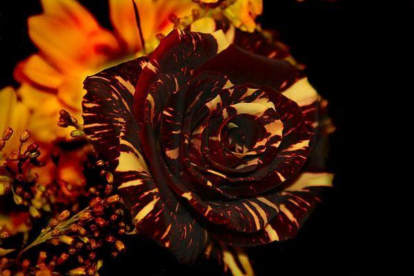 Diese Rose kenn ich noch nicht...