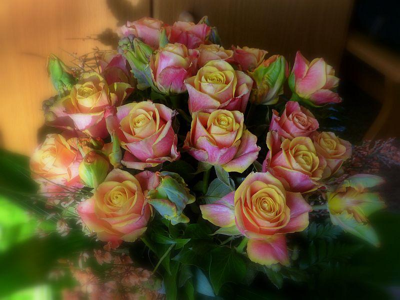 Diese Rosen