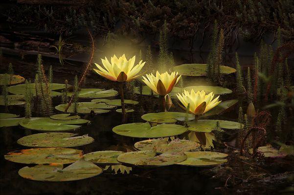 Diese Wunderblumen ...