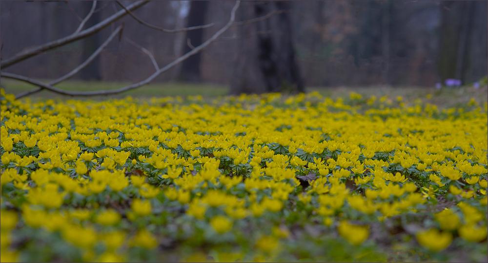 Diesen Blumenteppich…,
