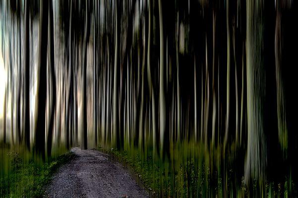 Diesen Weg