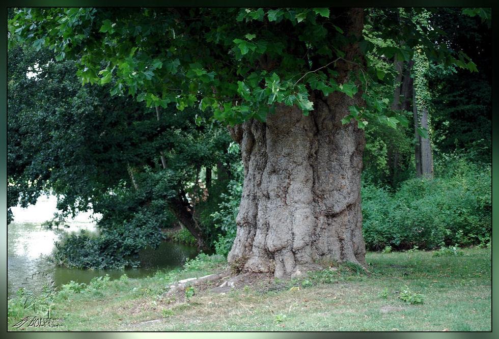 Dieser Baum hat bestimmt schon viel erlebt.