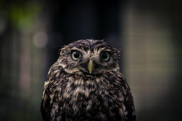 Dieser Blick :-)