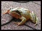 Dieser Frosch