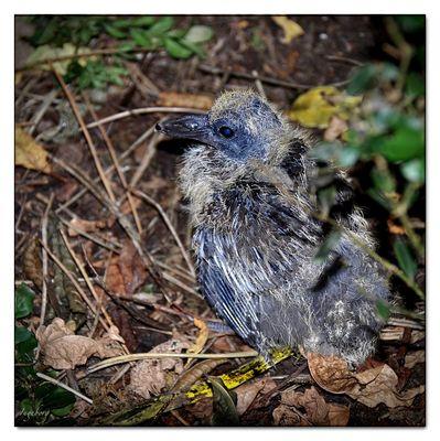 Dieser hässliche Jungvogel