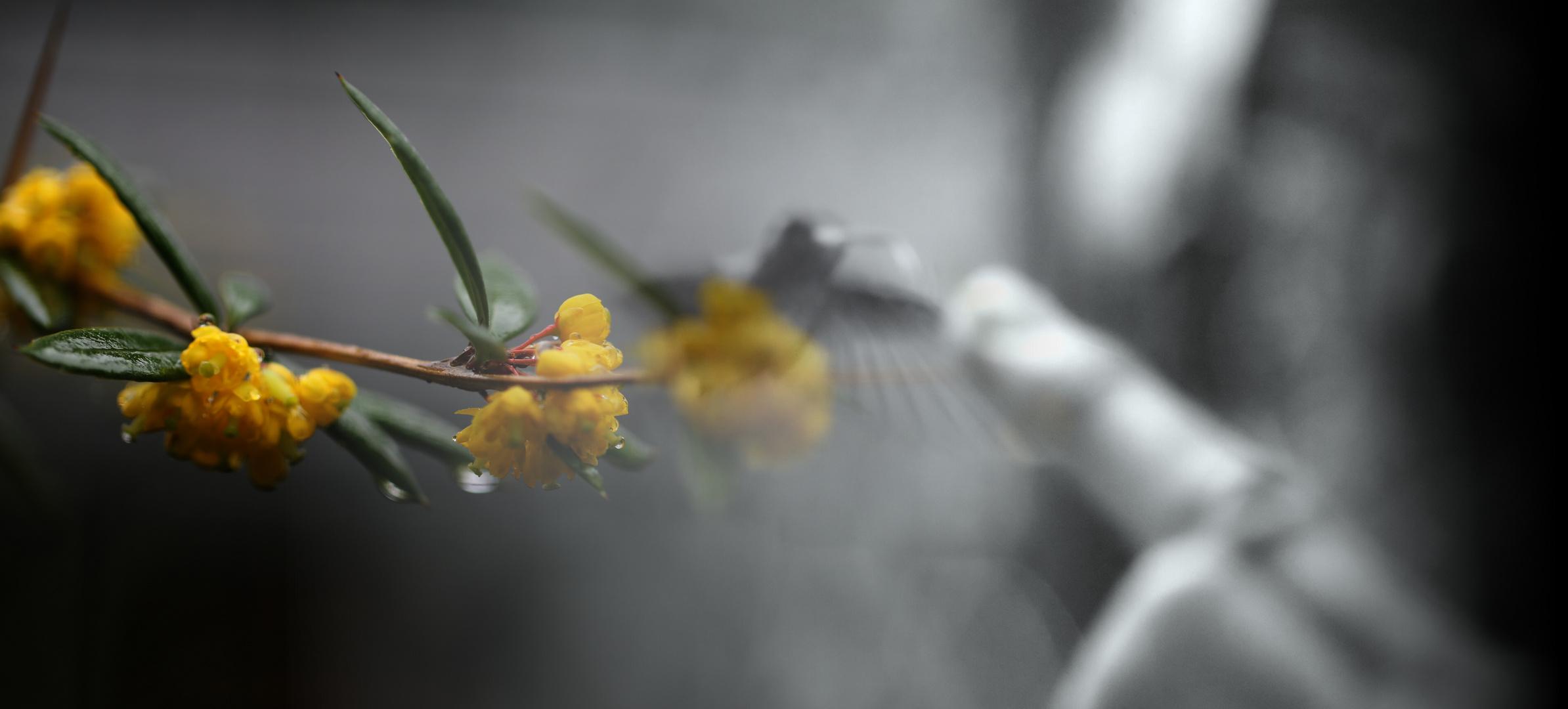Dieser Kolibri...