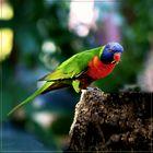 Dieser Papagei frisst lieber frische Maden