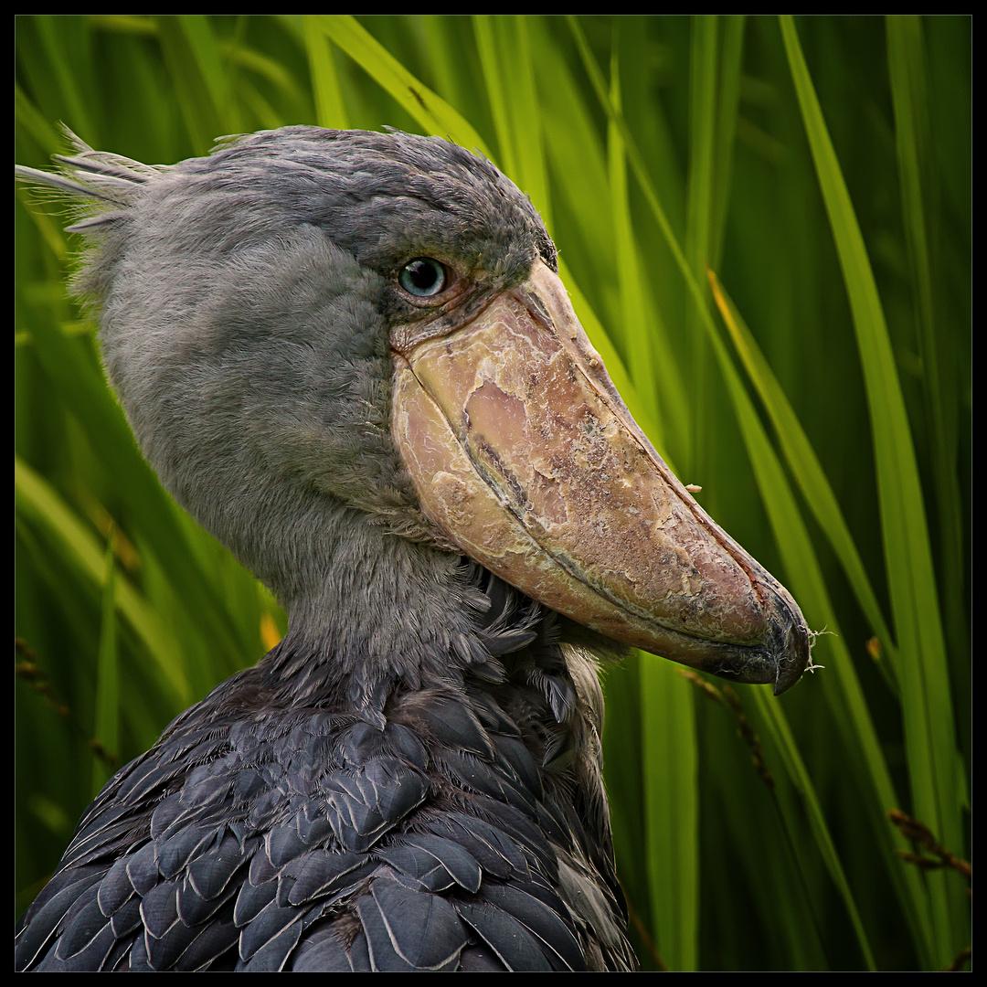 Dieser Schnabel ist in der Vogelwelt einmalig.