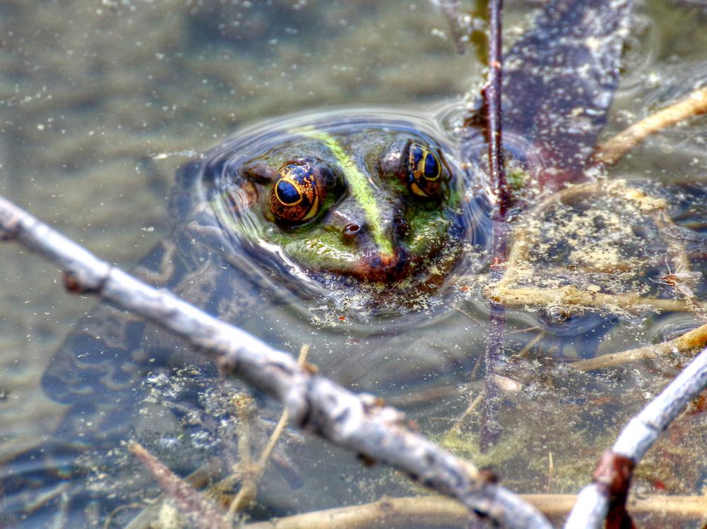 Dieser treue Blick ging mir zu Herzen - Quak!