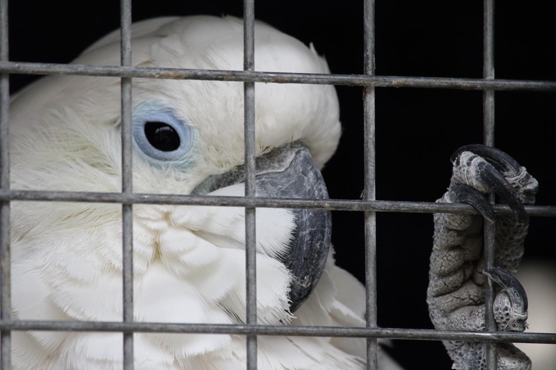 Dieser Vogel beisst.