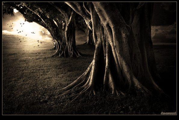Dieser Weg..........