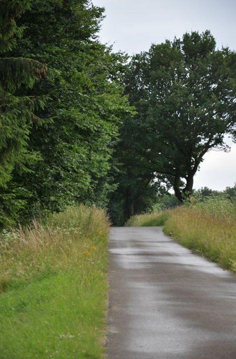 Dieser Weg . . .