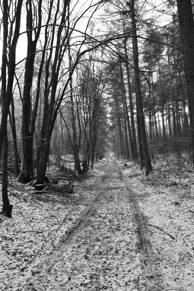 Dieser Weg...wird kein leichter sein... :)