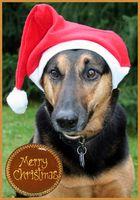 Dieses Jahr ist die Weihnachtswurst gesichert ;-)
