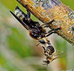 diesmal eine Biene zum Frühstück..