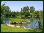 Dietenbachsee in Freiburg
