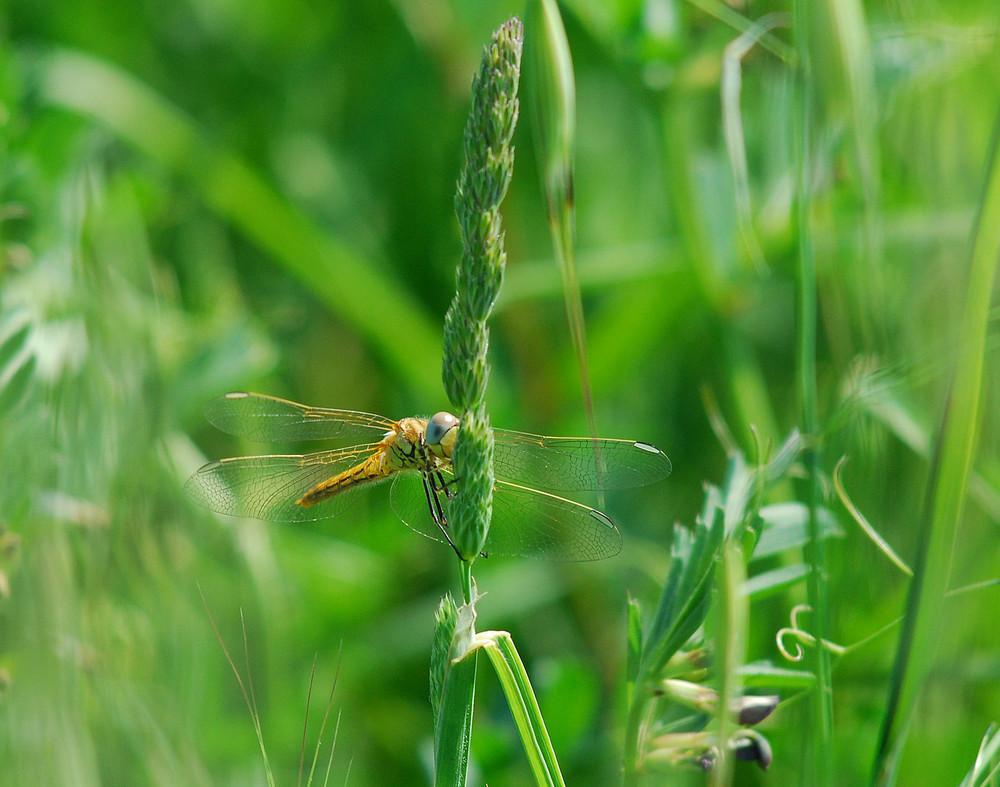 Dietro a un filo d'erba