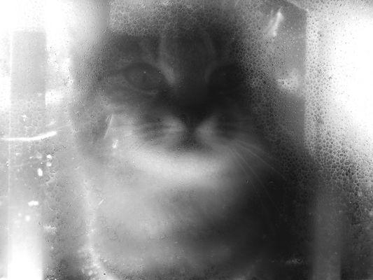 dietro il vetro