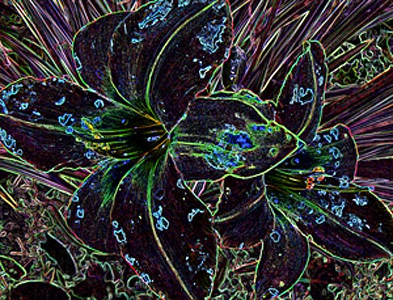 Digital Lily