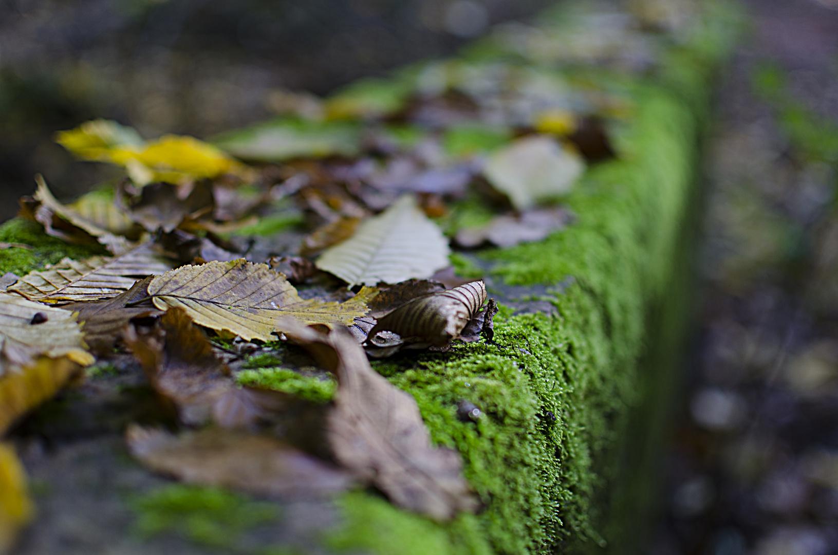 Dillinger Wald 1