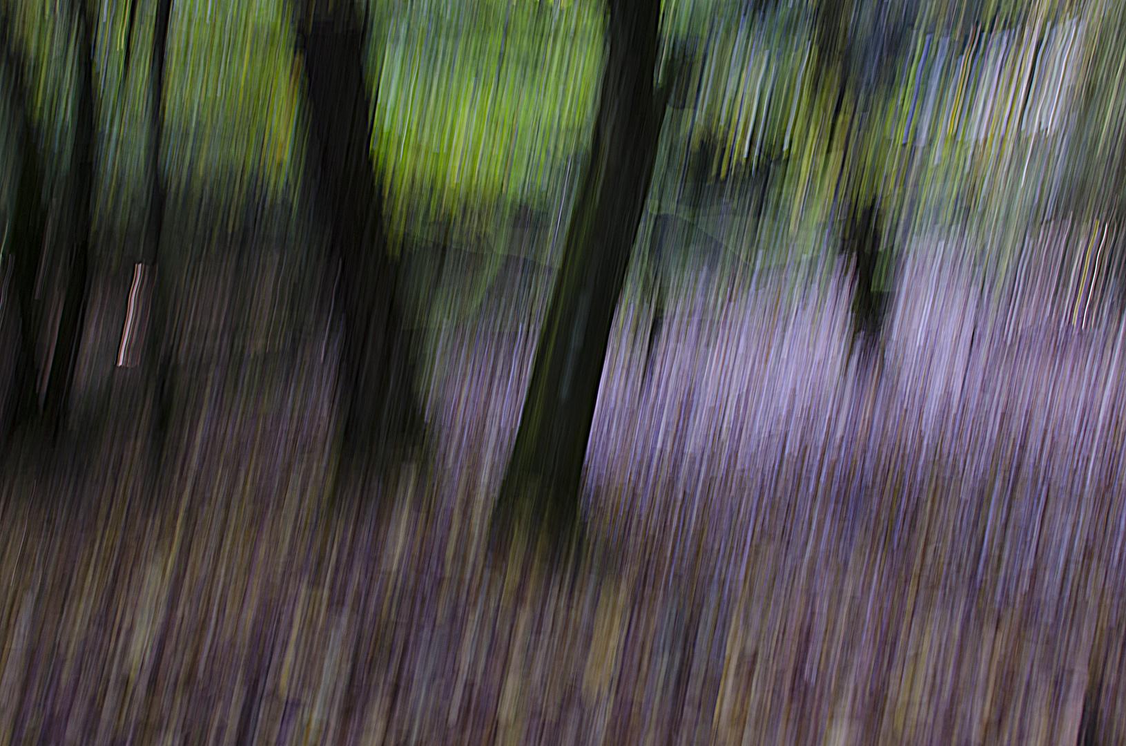 Dillinger Wald