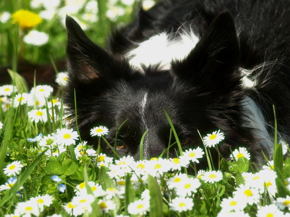 Dina, mein Blumenmädchen!