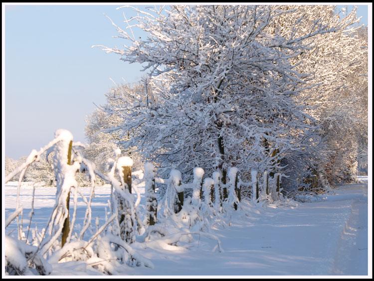 Dingdener Heide Januar 2009 (2)