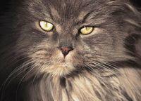 Dinh Katzenspiegel - die Stiime aus dem Jenseits