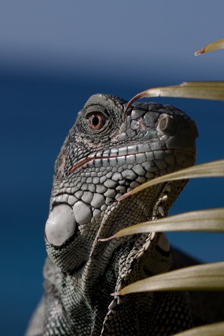 Dino auf der Lauer