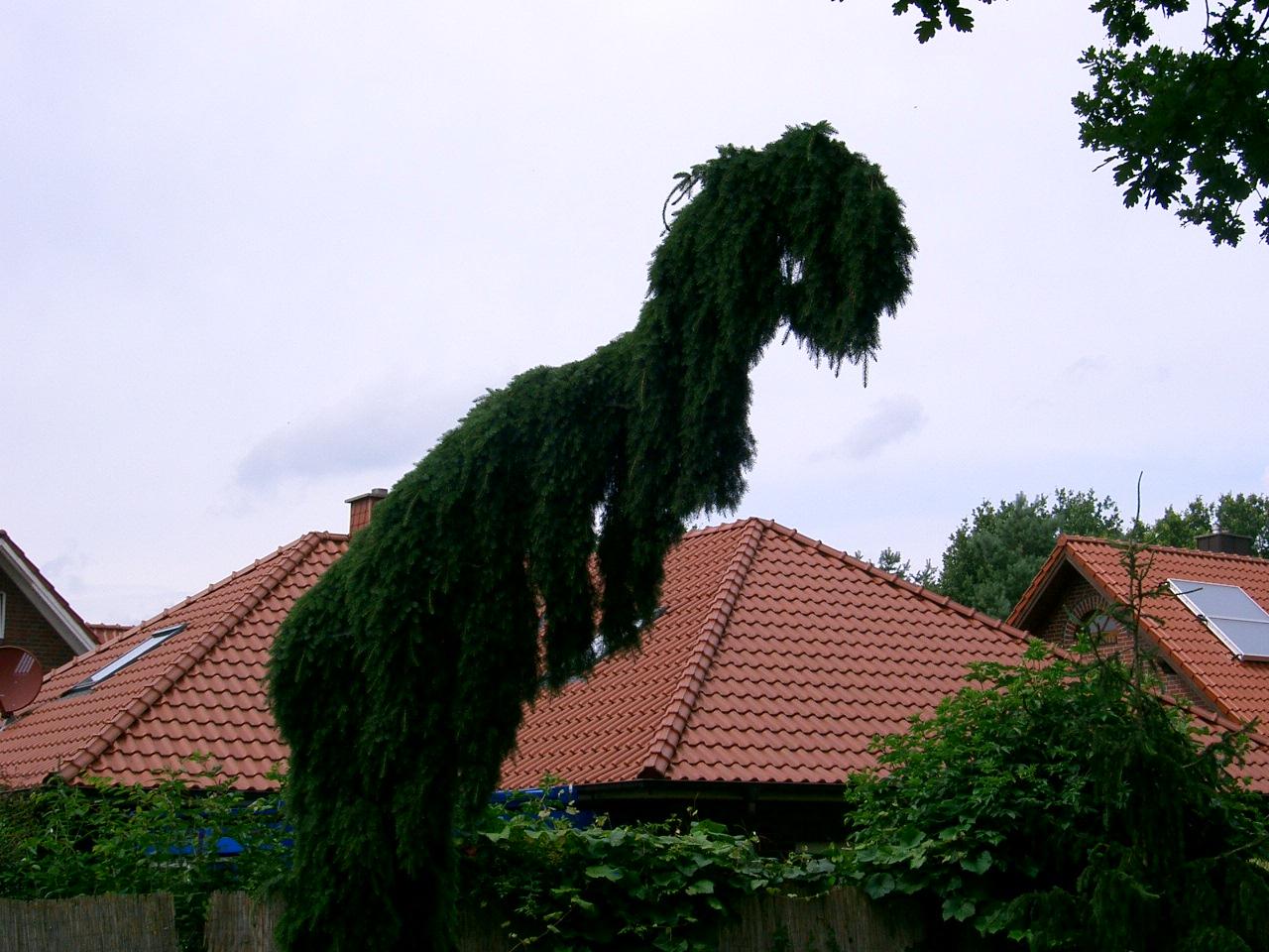 Dino oder Baum.