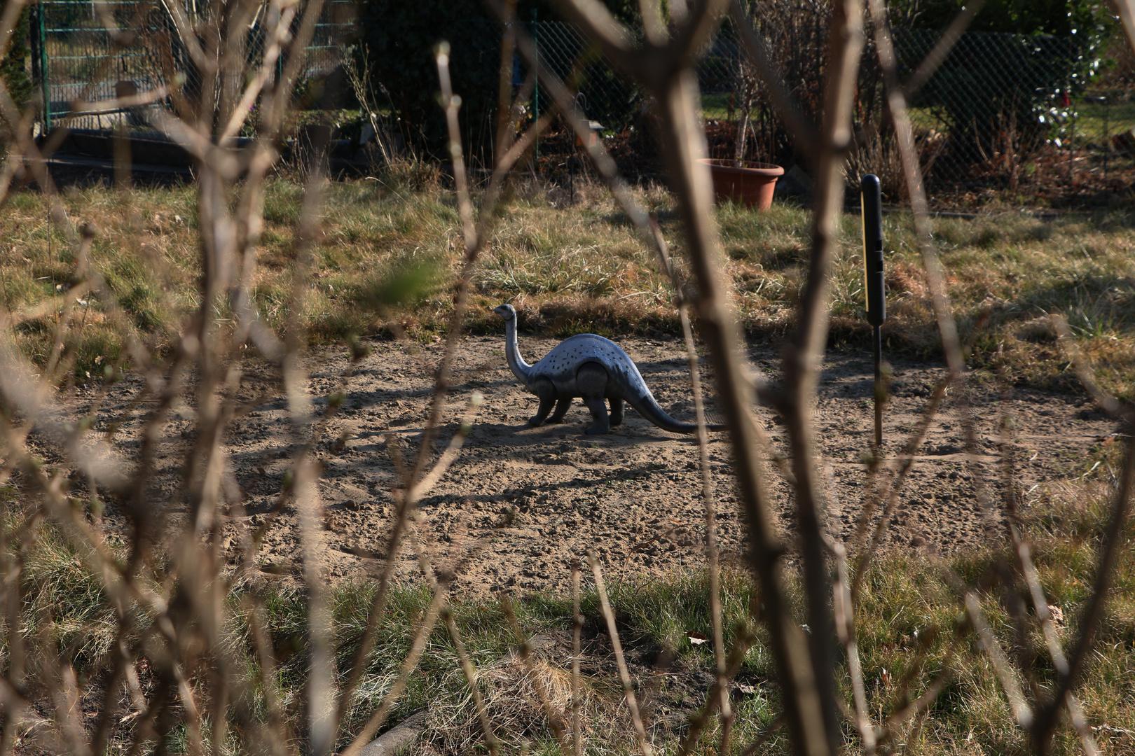 Dinoland im Kleingarten