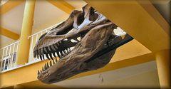 Dinossauro al Museo.