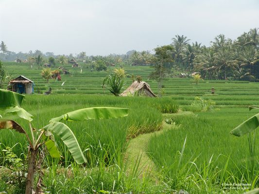 Dir grüne Seele Balis