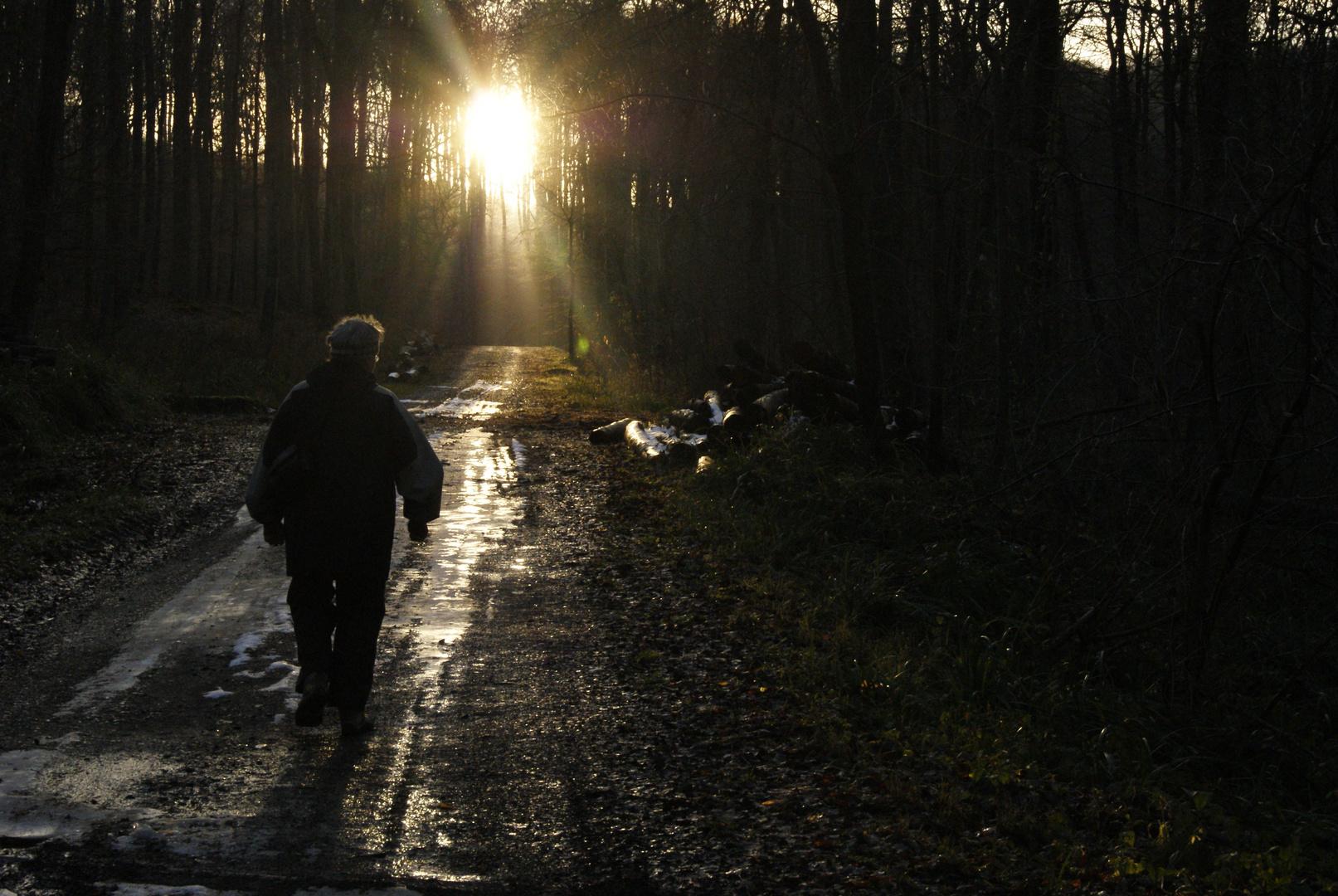 direction le soleil!! forêt de clermont, oise